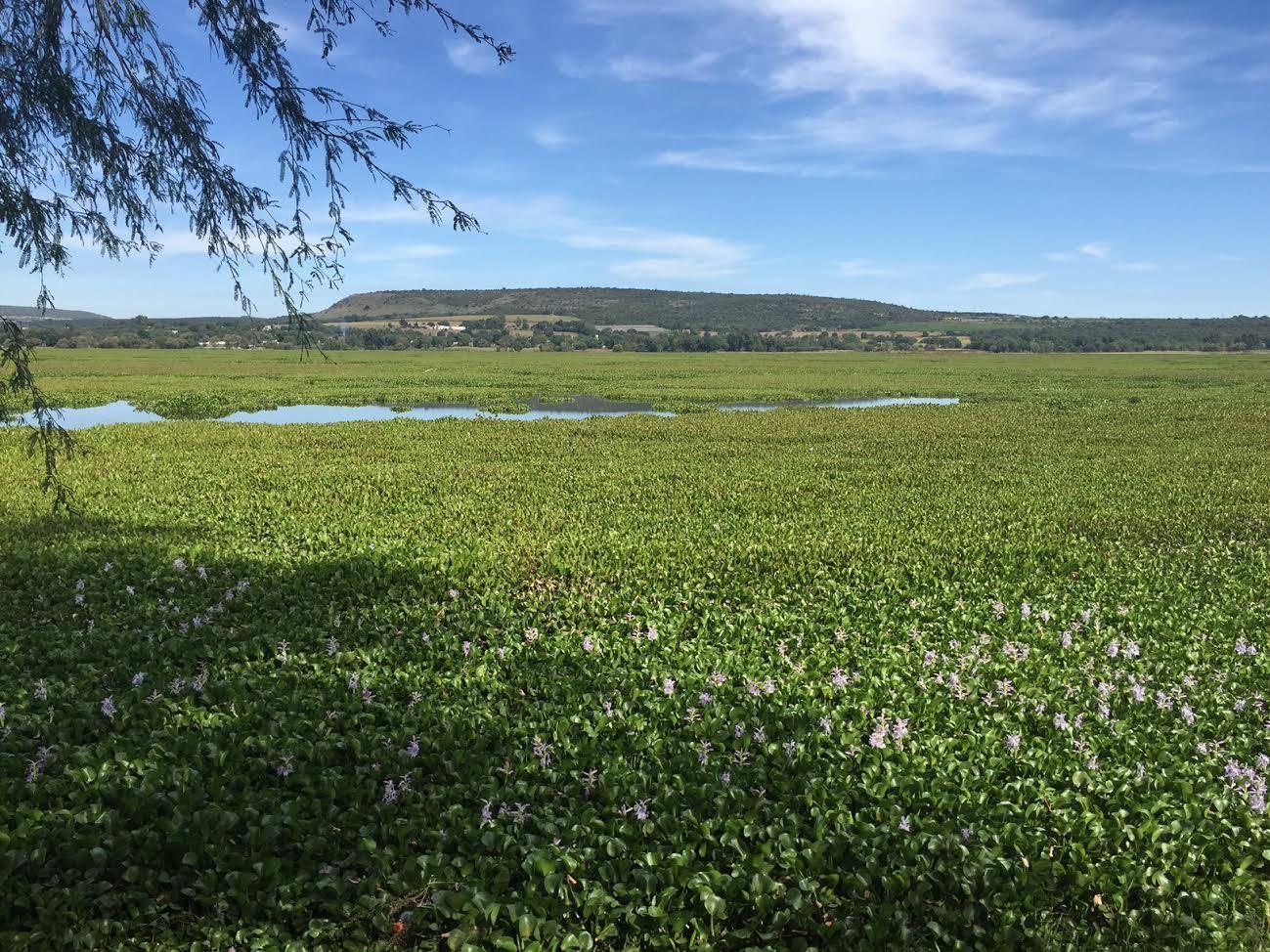 Photo of Busca gobierno recursos para planta tratadora de aguas en la laguna