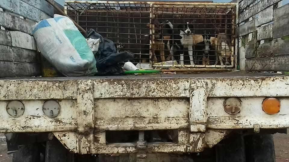 Photo of Denuncian maltrato animal por parte de funcionario en Encarnación de Díaz