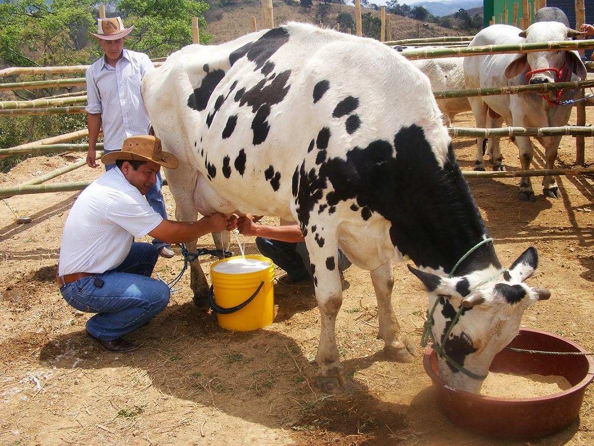 Photo of Pide Diputada Soraya Flores a la industria que pague un precio justo a los productores lecheros.